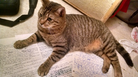 My cat Rufio decided to spare you my awful adolescent writing.